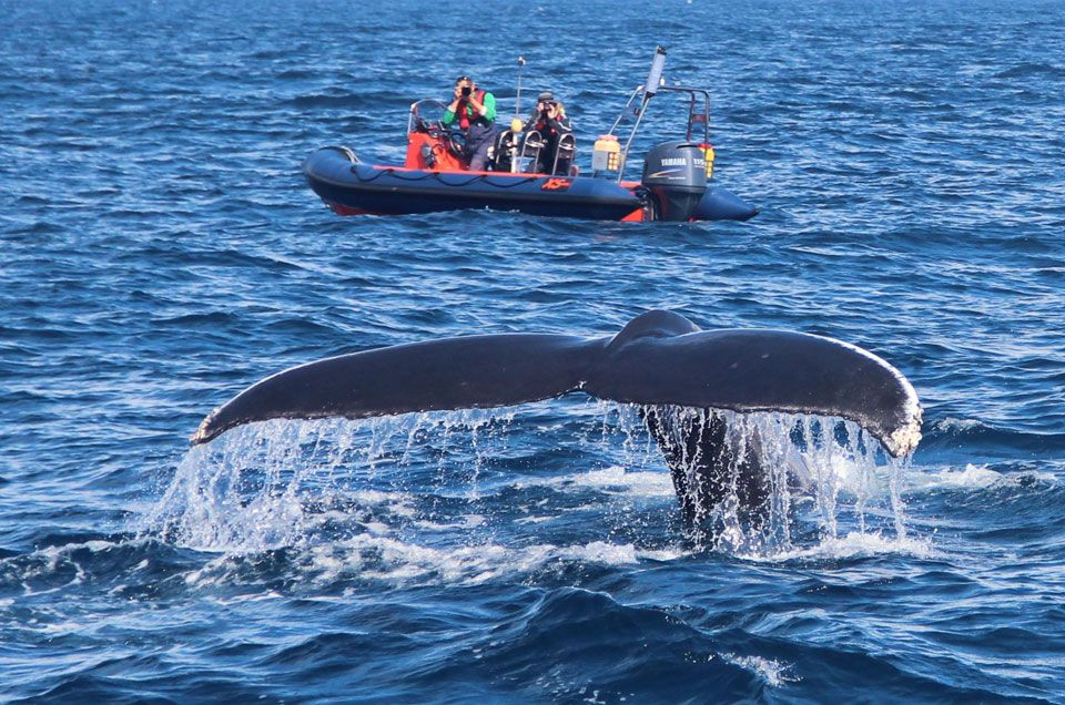 Whale Sightings on the Rise in Ireland