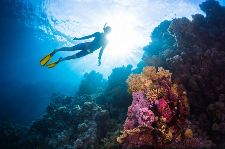Chasing Coral nominated for a Peabody Award in Documentary Filmmaking
