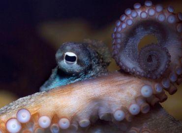 Celebrating World Octopus Day